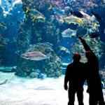 musee-oceanographique-ce1